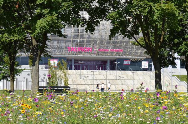 łąki kwietne w Katowicach